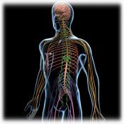 Нервна система (48)